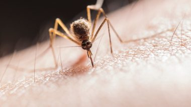 National Dengue Day 2020: From Tulsi to Garlic Cloves to Coffee Grounds, 6 Natural Mosquito Repellents for Your Home