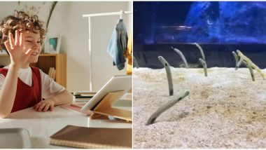 Eels With Feels! Japanese Aquarium Wants People to Video Call Their Shy Eels Who Are Getting Lonely During Lockdown (Watch Video)