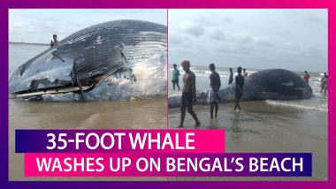 35-Foot Huge Whale Washes Up On Mandarmani Beach In West Bengal
