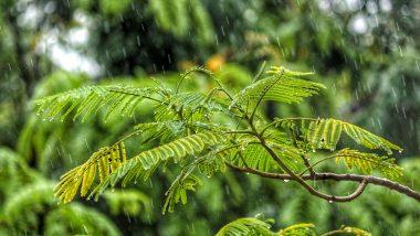 Monsoon 2020 Health Tips: 5 Dos And Don'ts To Keep Diseases at Bay This Rainy Season