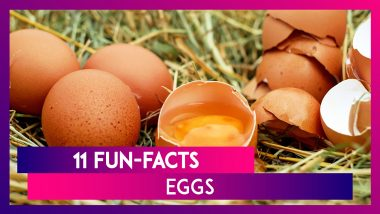 Why Are Some Eggs White-Shelled And Some Brown? 11 Fun-facts About Eggs