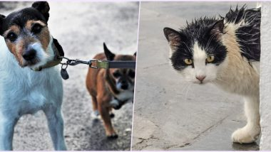 Cyclone Nisarga: How to Take Care of Your Pets and Help Strays During The Severe Cylonic Storm and Heavy Rains