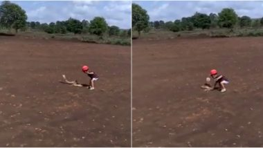 Little Boy Tries to Grab a Cobra While Playing With Father in Belgaum, Terrifying Video of Child Attempting to Catch Snake Goes Viral