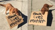 PAW-WERFUL! Dog Joins 'Black Lives Matter' Protest at Cincinnati, Video of This Golden Retriever Named Buddy Holding BLM Placard Goes Viral