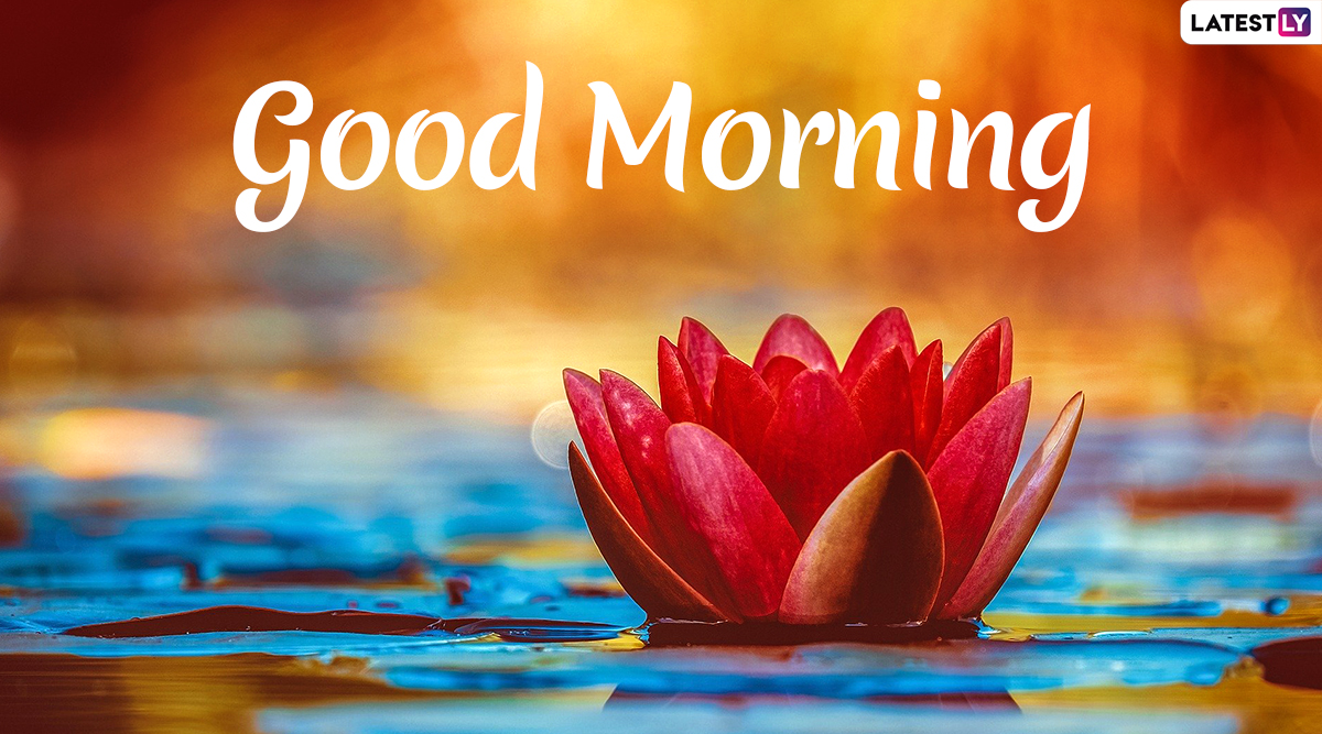 Send Good Morning Hd Images Wishes To Family Friends As No Phishing Codes Are Embedded In These Messages And Greetings Download 51,181 good morning images and stock photos. send good morning hd images wishes to