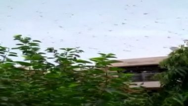 Locust Attack: Locusts Cloud Over Gurugram, Swarms of Tiddi Dal May Spare Delhi, Say Officials