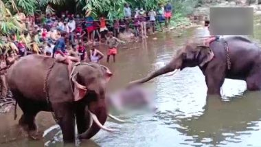 Pregnant Elephant Dies After Eating Firecracker-Filled Pineapple in Kerala's Palakkad, FIR Registered Against Unidentified People