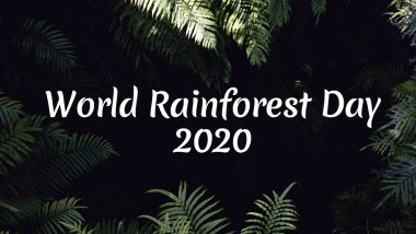 World Rainforest Day 2020 Date & Significance: Know History of the Day That Celebrates Amazon Rainforests and Raises Awareness About The Valuable Natural Resource