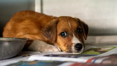 What Do You If You Witness Animal Cruelty? Steps to Take if You Encounter Animal Abuse