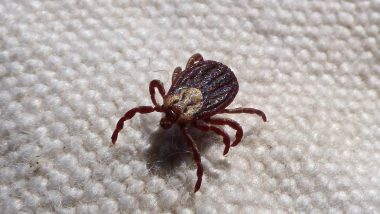 Blood-Sucking 'Mutant' Ticks Invade Russia, Hospitals Fear Running Out of Vaccines and Medicines for Types of Disease That Ticks Spread