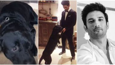 Sushant Singh Rajput's Pet Dog Fudge is ALIVE! Here's the Fact Check on Its 'Death' Rumours