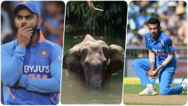 Virat Kohli & Yuzvendra Chahal Condemn the Death of Pregnant Elephant in Kerala, Indian Captain Labels it a Cowardly Act!