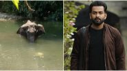 Prithviraj Sukumaran Fact-Checks The Death of Pregnant Elephant in Kerala To Rule Out Communal Angle In The Incident