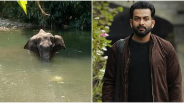 Prithviraj Shares Details of Elephant Killing in Kerala