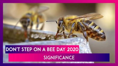 Don't Step On A Bee Day 2020: Know Significance Of Day Promoting Protection Of Bees