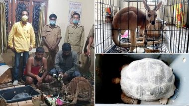Assam Forest Officials Seize Illegal Consignment of Exotic Animals in Silchar, Rescue Kangaroo, 6 Macaw Parrots, 3 Tortoises
