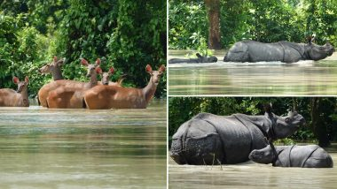 Assam Floods: 80% of Kaziranga National Park Submerged in Water, Heartbreaking Pics and Videos Show Rhinoceros & Other Animals Trying to Escape the Waterlogged Region