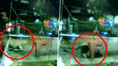 Tallital: Leopard Enters House, Attacks Dog And Takes It Away, Watch Chilling Video