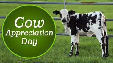 Cow Appreciation Day 2020: Date, History and Significance of the Day on Which People Dress Up Like Cows for Free Food