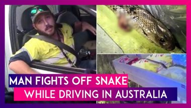 Man Fights Off World's Deadliest Eastern Brown Snake While Driving A Truck In Australia