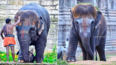 Meet Bob-Cut Sengamalam, The Tamil Nadu Elephant Whose New Hairstyle Has Made Jumbo the Internet Favourite (See Adorable Pictures)