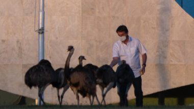 Brazilian President Jair Bolsonaro, Under COVID-19 Quarantine, Bitten Hard by Emu-Like Bird at Presidential Palace
