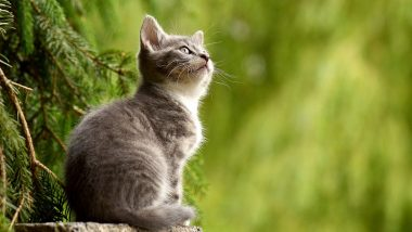 UK Sees First Case of COVID-19 in Animals as Pet Cat Gets Infected by Its Owner! From Minks to Dogs, Animals That Have Been Tested Coronavirus Positive