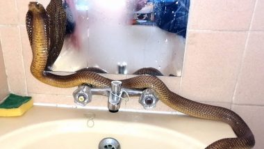 Cobra Snake Freezing to Death Rescued From Cold Construction Site in Western Cape of South Africa, Given a Hot Water Bath to Warm Itself (Watch Amusing Video)