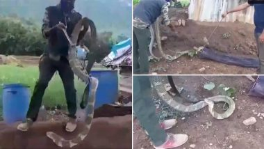 Video of 15-Feet Cobra Rescue in Tamil Nadu Goes Viral, Know How Long Can This Longest Venomous Snake Grow