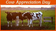 Cow Appreciation Day 2020: 10 Interesting Facts About The Farm Animal That Are A-MOO-SING!