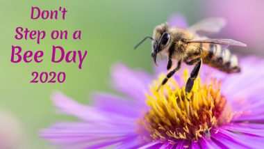 Don't Step on a Bee Day 2020: Avoiding Pesticides to Buying Honey From Local Beekeepers, Easy Ways to Save Honey Bees From From Extinction