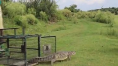 Crocodile Rescued From Toilet of House in Uttar Pradesh's Firozabad (Watch Video)
