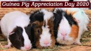 Guinea Pig Appreciation Day 2020: Interesting Facts About This Pocket Pet You Probably May Not Have Known!