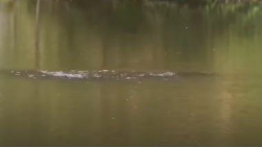 'Loch Ness' in China? Mystery Creature Spotted in Luoyang Lake Sparks Speculations About Monster Being Similar to Nessie (Watch Video)