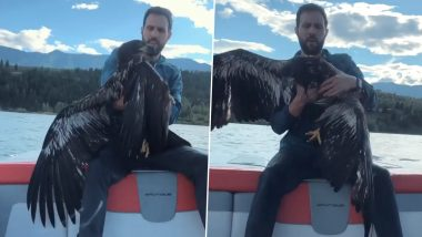 Man Saves Baby Eagle From Drowning in Lake at British Columbia's Invermere Region (Watch Viral Rescue Video)
