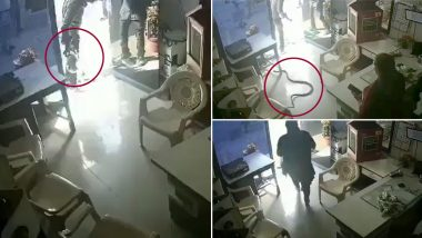 Shocking! Man Purposely Throws Huge Snake at Mumbai Petrol Pump Owner's Cabin For Refusing Fuel in Bottle (Watch CCTV Video)