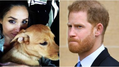 Meghan Markle and Her Rescue Pooch Bogart Won't Reunite and the Reason Is Prince Harry!