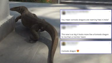 Huge Monitor Lizard Spotted Outside a Home in Delhi, Netizens Confuse it For Komodo Dragon Because of Its Size (View Viral Pic)