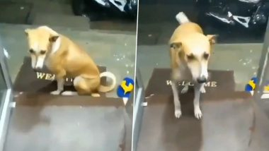 As Rains Hit Mumbai, This Video of Shopkeeper Offering Shelter to Drenched Street Dog Will Warm Your Heart!