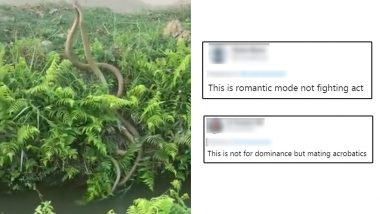 Viral Video Shows Rat Snakes Fighting For Dominance But Netizens Believe This Dance-Off Is An Act of Mating
