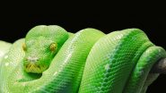 World Snake Day 2020: Fascinating Yet Creepy Pics of Different Serpents That Exist in Nature