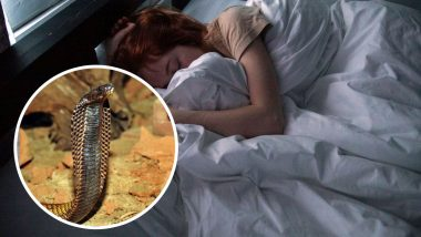 Snakes in Dreams? What does it Symbolise? Know The Meaning of Seeing Serpents While Sleeping