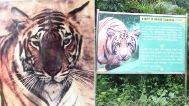 Tiger Ek Prem Katha: Here's What Happened When Kanan, a Tigress, Gave Up Her Freedom to Be in Captivity With Pradeep, a Tiger, in Odisha's Nandankanan Zoo!
