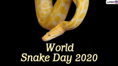 World Snake Day 2020: Did You Know Some Snakes Can Fly? Here Are Interesting Facts About The Carnivorous Reptiles