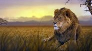 World Lion Day 2020: Date, Significance, Some Facts and Stunning Images of Lions, the King of Jungle