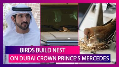 Dubai Crown Prince Stops Using His Mercedes, Cordons It Off After Birds Build Nest On It