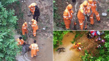 Baby Elephant Found Dead Under Achankovil Bridge in Kerala's Pathanamthitta District