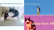 International Cat Day 2020 Funny Cat Memes and Jokes: Feline Blue? Hilarious Posts About Cats That Will Make Your Day!