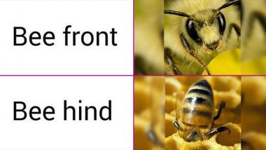 National Honey Bee Day 2020 Funny Memes and Jokes: LOL at These UnBEElievably Hilarious Posts to Celebrate the Day