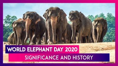 World Elephant Day 2020: Significance And History of Observance That Promotes Protection of Jumbos